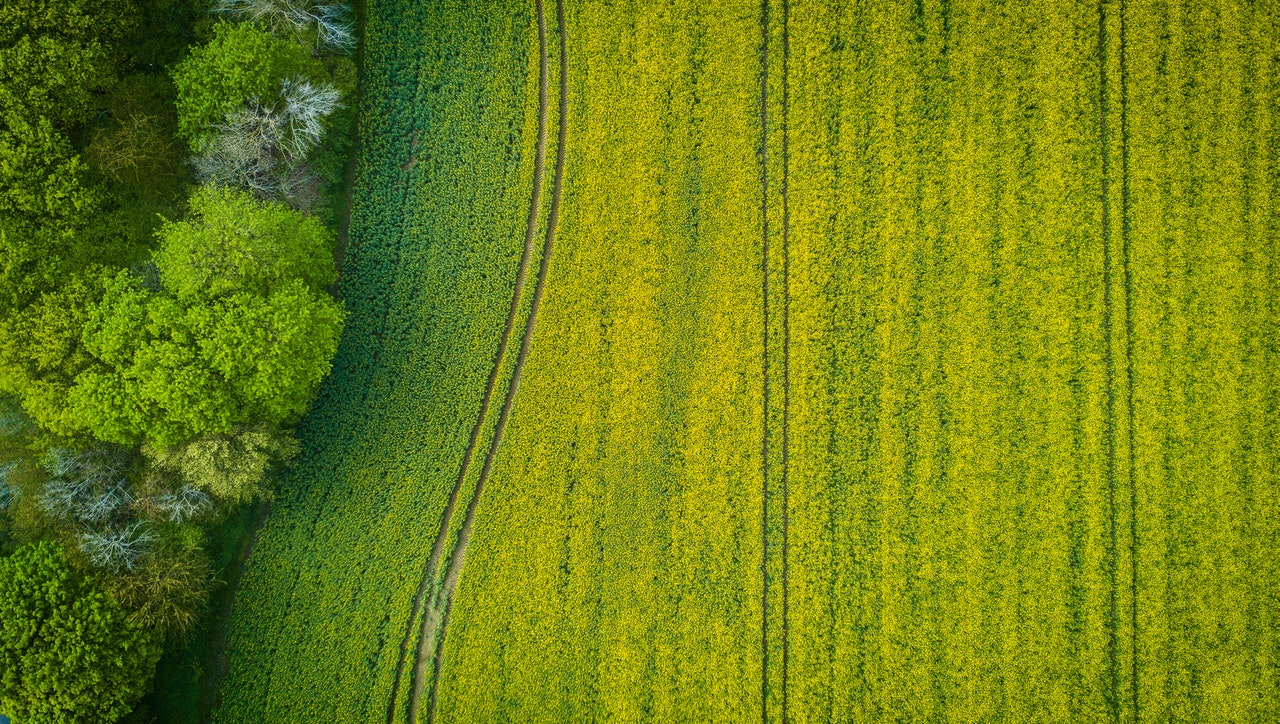 green_field_overhead
